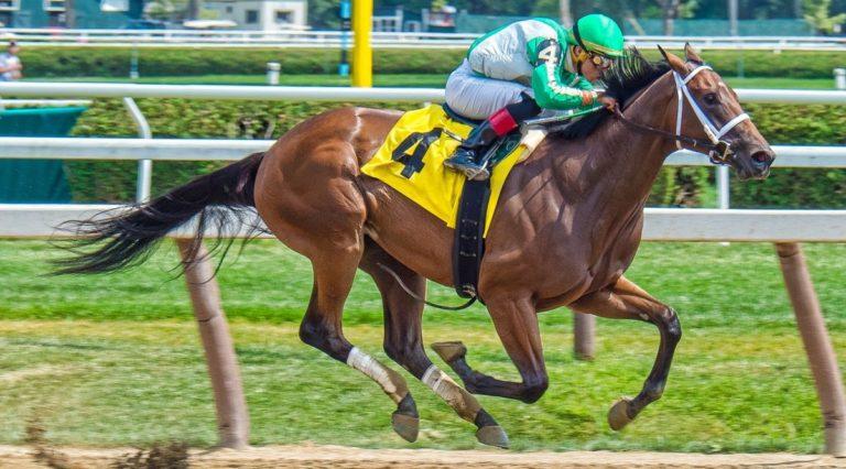 race-horse-2629450_1280